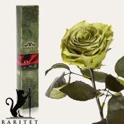 Долгосвежая роза в Florich ЛАЙМОВЫЙ НЕФРИТ (5 карат на коротком стебле)