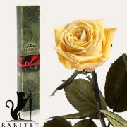 Долгосвежая роза в Florich ЖЕЛТЫЙ ТОПАЗ (7 карат на коротком стебле)