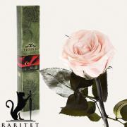 Долгосвежая роза в Florich РОЗОВЫЙ ЖЕМЧУГ (5 карат на коротком стебле)