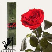 Долгосвежая роза в Florich КРАСНЫЙ РУБИН (7 карат на коротком стебле)