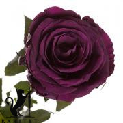 Долгосвежая роза Florich ФИОЛЕТОВЫЙ АМЕТИСТ (5 карат на коротком стебле)