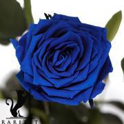 Долгосвежая роза в Florich СИНИЙ САПФИР (5 карат на коротком стебле)