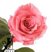 Долгосвежая роза - РОЗОВЫЙ КВАРЦ (5 карат на коротком стебле) от 5 штук.