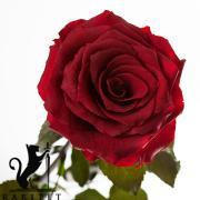 Долгосвежая роза в Florich БАГРОВЫЙ ГРАНАТ (5 карат на коротком стебле)