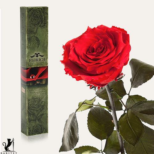 Долгосвежая роза в Florich КРАСНЫЙ РУБИН (5 карат на коротком стебле)