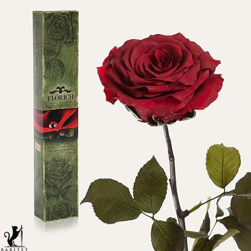 Долгосвежая роза в Florich БАГРОВЫЙ ГРАНАТ (7 карат на коротком стебле)