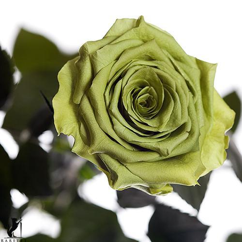 Долгосвежая роза - ЛАЙМОВЫЙ НЕФРИТ (5 карат на коротком стебле) от 5 штук.