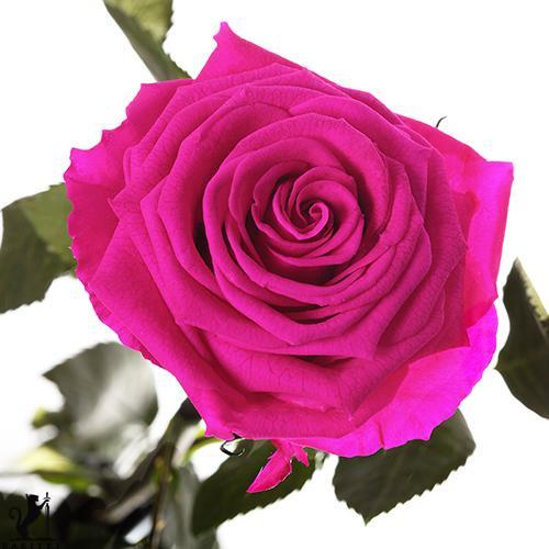 Долгосвежая роза - МАЛИНОВЫЙ РОДОЛИТ (5 карат на коротком стебле) от 5 штук.