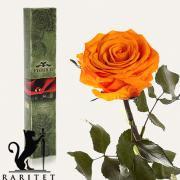 Долгосвежая роза в Florich ОРАНЖЕВЫЙ ЦИТРИН (5 карат на коротком стебле)