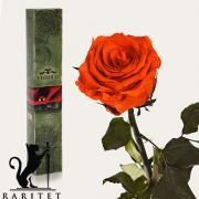 Долгосвежая роза в Florich ОГНЕННЫЙ ЯНТАРЬ (5 карат на коротком стебле)