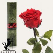Долгосвежая роза в Florich АЛЫЙ РУБИН (5 карат на коротком стебле)