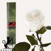 Долгосвежая роза в Florich БЕЛЫЙ БРИЛЛИАНТ (5 карат на коротком стебле)